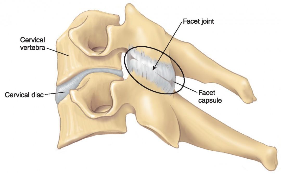 Cuboid bone  Wikipedia