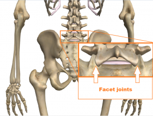 low back - facet joints