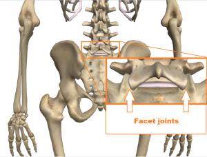 low back - facet joints