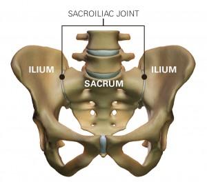 sacroiliac joints